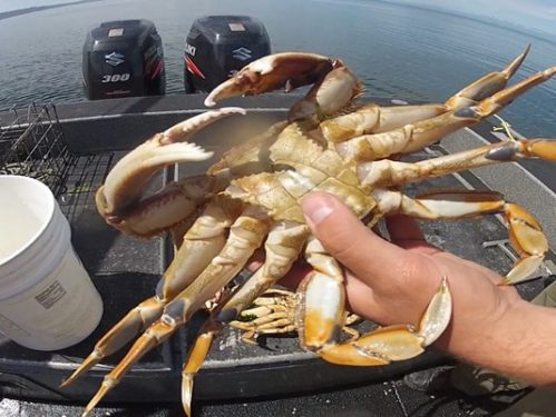 hand holding a crab