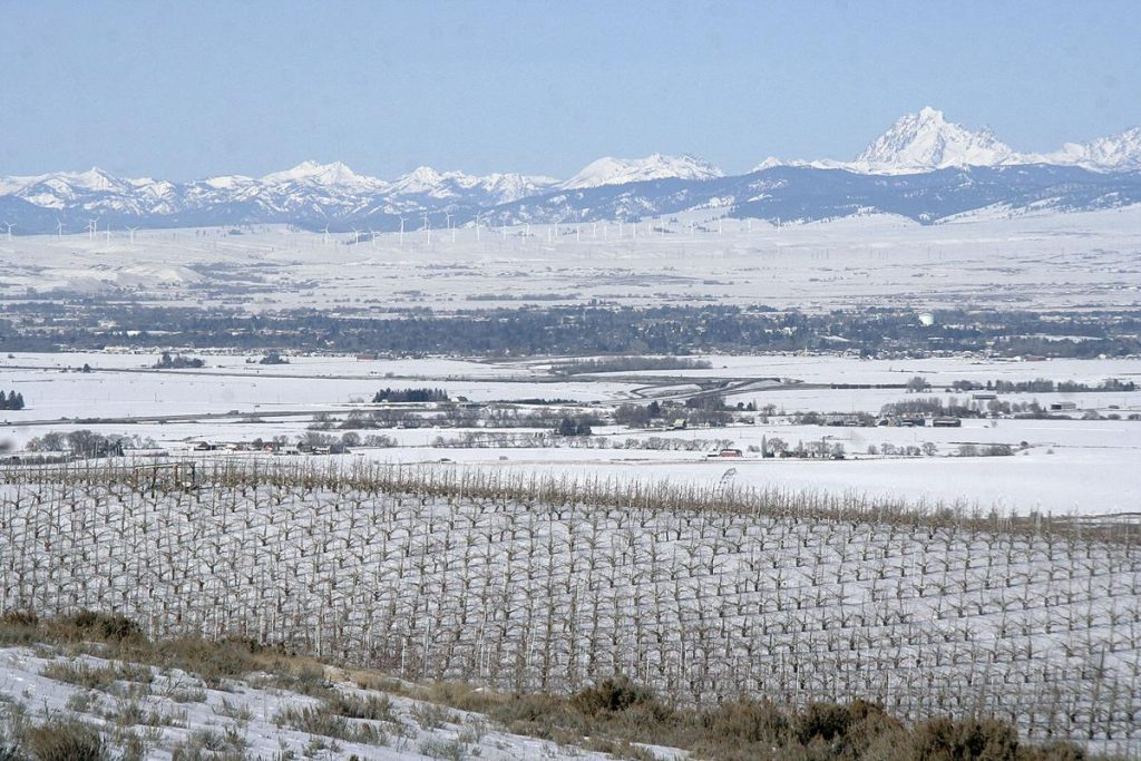 A snow covered Ellensburg, WA with vines in the foreground