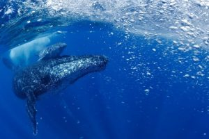 Mommy and baby whale